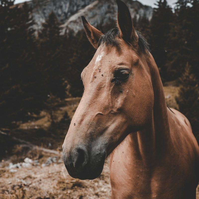 Horses, hives,