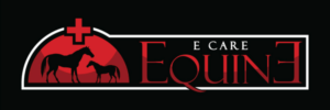 wound care for horses, injured horses, equine care, equine recovery care